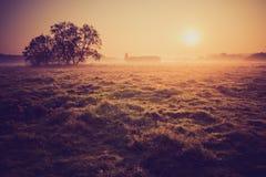 Tappningfoto av den dimmiga ängen för morgon i sommar lantlig liggande Royaltyfria Bilder