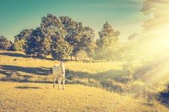 Tappningfoto av en grå häst som kör i en äng på en grön lutning av kullen royaltyfri bild