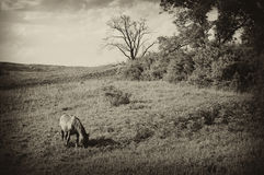 Tappningfoto av en liggande med hästen på sommaren royaltyfri bild