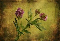 Tappningfoto av en purpurfärgad vildblomma Royaltyfri Fotografi
