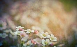 Tappningfoto av härliga små blommor Användbart som bakgrund Arkivbilder