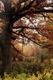 Tappningfoto av höstskogen Fotografering för Bildbyråer
