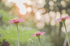 Tappningfoto av naturbakgrund med lösa blommor och växter Arkivbild