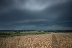 Tappningfoto av stormmoln över vetefält Royaltyfria Bilder