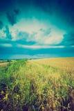 Tappningfoto av stormmoln över vetefält Arkivfoto