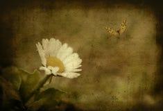 Tappningfoto av tusenskönan Royaltyfri Bild