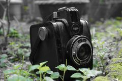 TappningGevabox Gevaert kamera royaltyfri bild