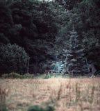 Tappninggungakuggen för barn mellan sörjer träd arkivbilder