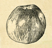 Tappningillustration av ett äpple från den gamla sovjetiska boken stock illustrationer
