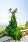 Tappninglampstolpe med två lyktor som täckas med den tjocka rankaväxten för gräsplan ivi Scenisk landskapsikt i bakgrunden royaltyfria foton