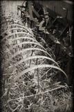 Tappninglantgårdutrustning i sepia med en texturerad samkopiering royaltyfria foton
