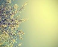Tappningnaturbakgrund Royaltyfria Foton