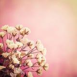 Tappningnaturbakgrund Royaltyfri Bild