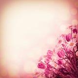 Tappningnaturbakgrund Royaltyfria Bilder