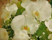 Tappningpapper med vita orkidér Arkivfoto