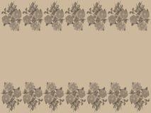 Tappningrosor på elfenbenbakgrund Royaltyfri Fotografi