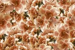 Tappningrosröd-guling-brunt blommor bakgrundsbanret blommar datalistor little rosa spiral blom- collage vita tulpan för blomma fö arkivbilder