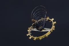 Tappningrovaspiralfjäder inställd i Midair arkivfoto