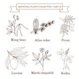 Tappningsamling av hand drog medicinska örter och växter stock illustrationer