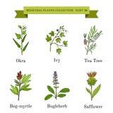 Tappningsamling av hand drog medicinska örter och växter royaltyfri illustrationer