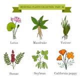 Tappningsamling av hand drog medicinska örter och växter, lotusblomma, alruna, vetiver, sumac, sojaböna, caloforniavallmo stock illustrationer