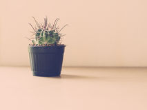 Tappningsignal av kaktuns Arkivfoto