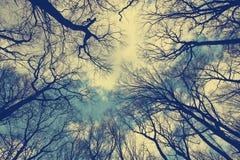 Tappningskogbakgrund Royaltyfria Foton
