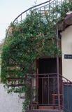 Tappningspiraltrappuppgång med växter Royaltyfri Foto