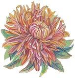 Tappningteckning av blommor vektor illustrationer