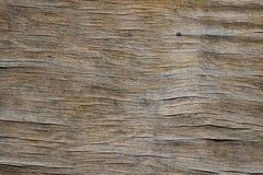 Tappningträurblekt åldrigt bräde med sprickor, kontroller och defekter Arkivfoto
