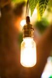 Tappningvolframlightbulbs som hänger på träd med bokehbackgroun Arkivfoton