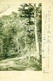 Tappningvykortet som skrivs ut i Japan, visar sommarskogen Royaltyfri Fotografi