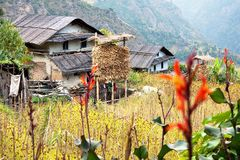Tappo - il counryside del Nepal Immagine Stock