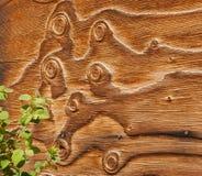 Tapume de madeira do celeiro Curly com plantas Imagens de Stock Royalty Free