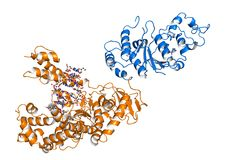 Taq polymerase Royalty Free Stock Photos