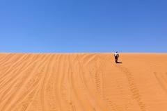 Taqueuse de dune images libres de droits