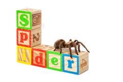 Tarântula em blocos que soletra a aranha Imagens de Stock