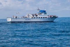 Tar det hållande ögonen på fartyget för valet med turister bilder av delfin på det är pilbågen arkivbilder