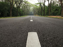 Tar Road with Trees. Low angle view of tar road with trees royalty free stock photos