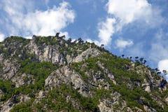 Tara bergSerbien landskap Royaltyfri Bild