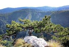 Tara Mountain Stockbild