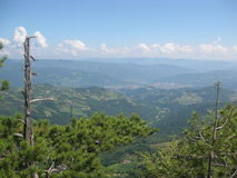 Tara mountain. Beautiful summer day on Tara mountain in western Serbia. Panorama view from the forest Stock Photos