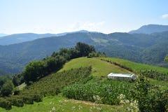 Tara mountain stock image