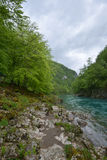Tara river in spring, Montenegro Royalty Free Stock Image