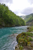 Tara river in spring, Montenegro Royalty Free Stock Photography