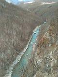 Tara rzeka Zdjęcie Stock