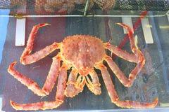 Taraba dennego królewiątka kraby w rybim rynku Obrazy Stock