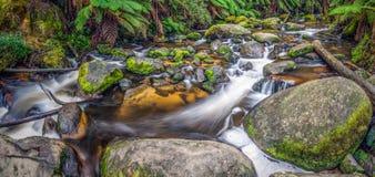 Taragodalingen - Australië stock afbeeldingen