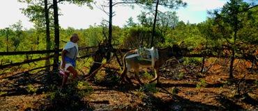 Tarahumara Immagine Stock Libera da Diritti