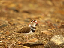 Pássaros africanos do sul Fotos de Stock